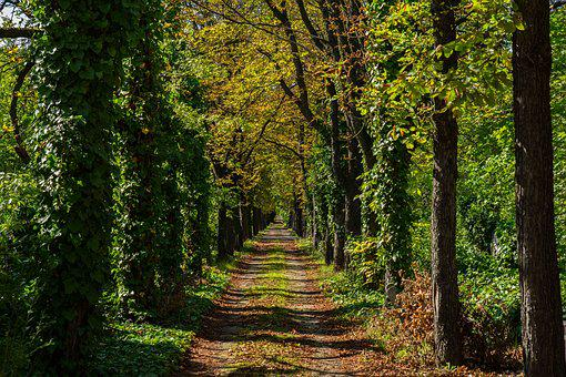 Nature, Road, Trees, Autumn, Cemetery, Leaves