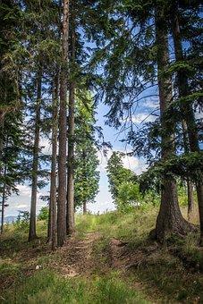Horizon, Forest, Trees, Nature, Walk