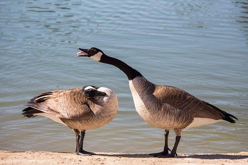 Bird, Water, Wildlife, Nature, Animal, Duck, That