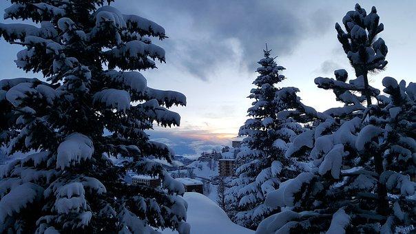 Winter, Snow, Tree, No Person