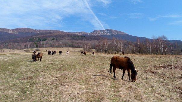 Nature, Animals, Lawn, Poloniny, Bieszczady, Hutsul