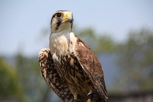 Animal World, Bird, Nature, Bird Of Prey, Animal, Prey