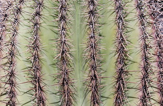 Cactus, Spine, Sharp, Prickly, Desert