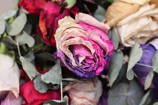 Flower, Rose, Flora, Nature, Decoration, Gift, Love