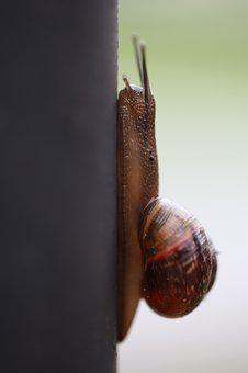 Snail, Whelks, Clam, Slow, Slimy, Nature