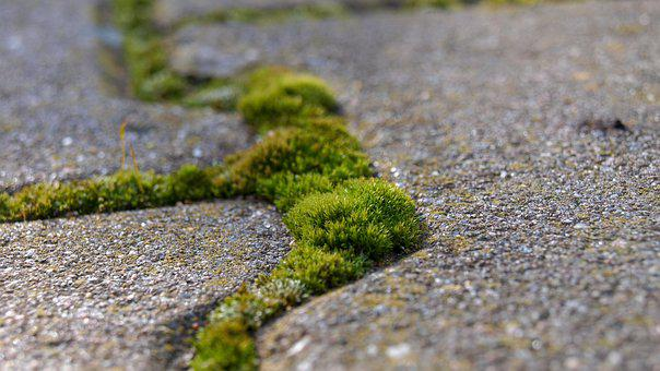 Nature, Moss, Stone, Flora, Rock, Structure, Patch