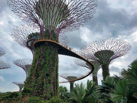 Singapore, Gardens By The Bay, Tree, Plant, Nature