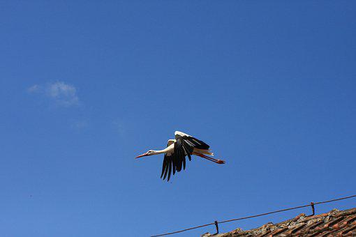 Bird, Sky, Nature, Wing, Animal World, Flight, Animal