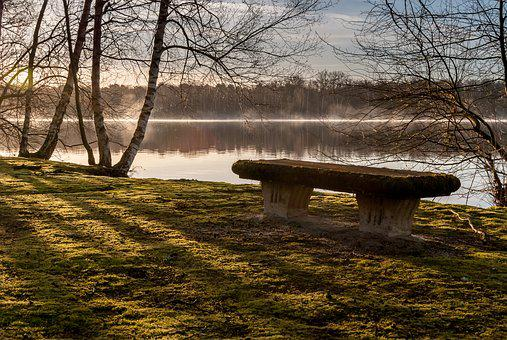 Nature, Landscape, Tree, Body Of Water, Wood, Bench
