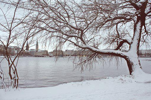 Winter, Snow, Tree, Cold, Frost, Alster