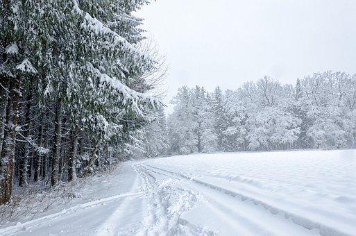 Snow, Winter, Frost, Cold, Wood, Frozen, Season, Tree