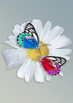 Daisy, Butterfly, Insect, Animal, Butterfy