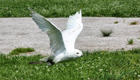 Nature, Bird, Grass, Summer, Freedom, Animal World