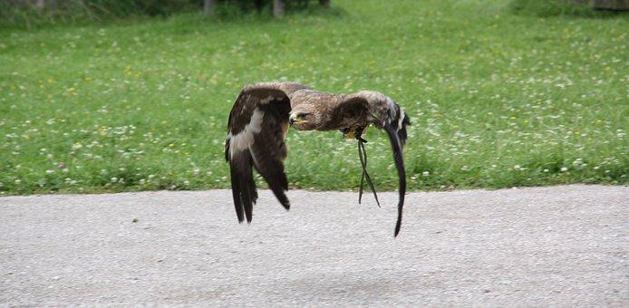 Animal, Nature, Animal World, Grass, Adler, Raptor, Owl