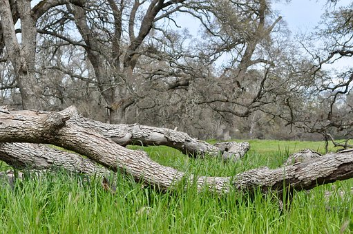 Nature, Tree, Landscape, Wood, Grass, Oak, Green