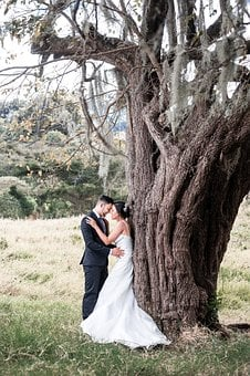Tree, Nature, Outdoors, Nice, Wedding, Couple, Young