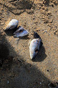 The Remains, Fish, Sand, Nature, Beach, Sea, Ocean
