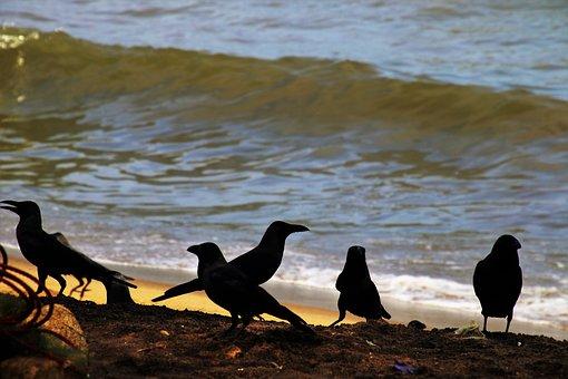 Beach, Raven, Wave, Water, Birds, Sand, Black, Ocean