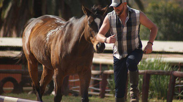 Outdoors, Cavalry, Mammal, Horse, Equestrian, Breed