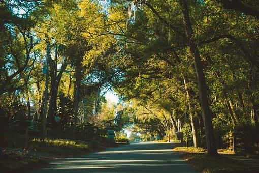 Tree, Nature, Leaf, Park, Wood, Landscape, Fall