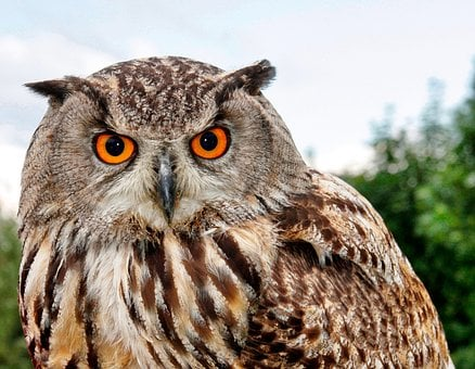 Bird Of Prey, Owl, Animal World, Animal, Prey, Nature