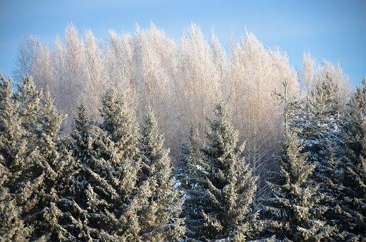 Leann, Snow, Winter, Coldly, Season, Frozen, Nature