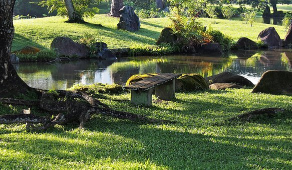 Grass, Nature, Summer, Landscape, Park, Outdoors