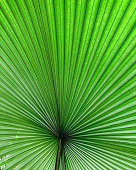 Leaf, Tropical, Summer, Plant, Palm, Nature, Fiddlehead