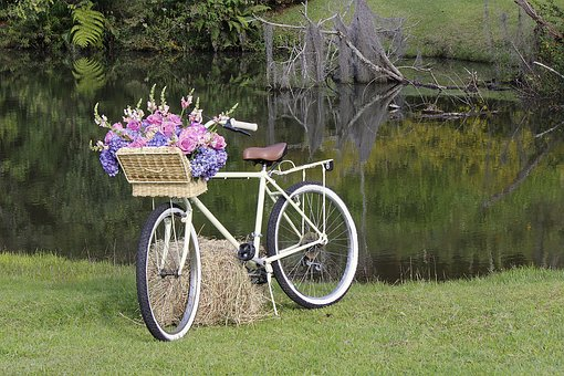 Lawn, Bike Old, Nature, Wedding, Flowers, Nuptials
