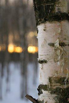 Outdoors, Tree, Wood, Nature, Winter