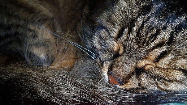 Cat, Peace Of Mind, Animal
