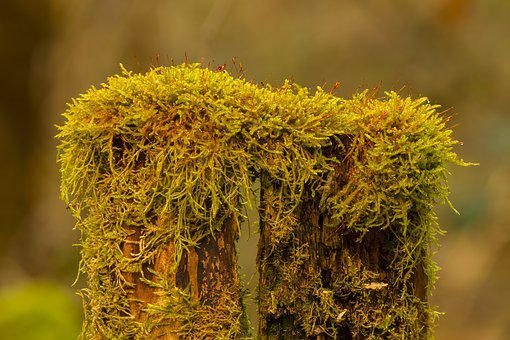 Moss, Bemoost, Tree Trunk, Green, Nature Recording
