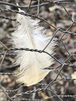 Nature, Outdoors, Wildlife, Feather, Downy, Hen