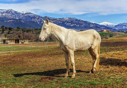 Horse, Henar, White, Nature, Pastures, Field, Farm