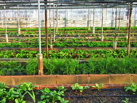 Greenhouse, Agriculture, Farm, Urban Farming, Gardening