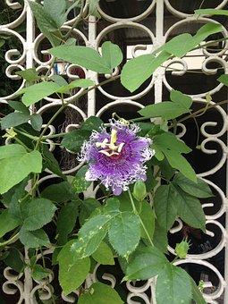 Plant, Nature, Leaf, Flower, Garden, Summer, Thailand