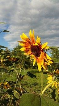Nature, Summer, Plant, Flower, Leaf, Garden, Outdoors