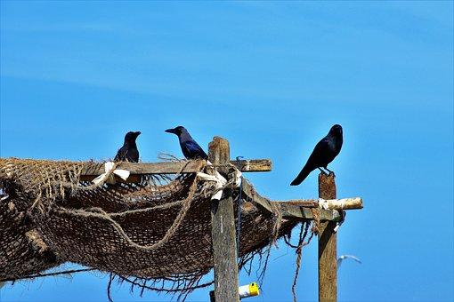 Raven, Blue Sky, A Fishing Village, Nature, Birds, Sky