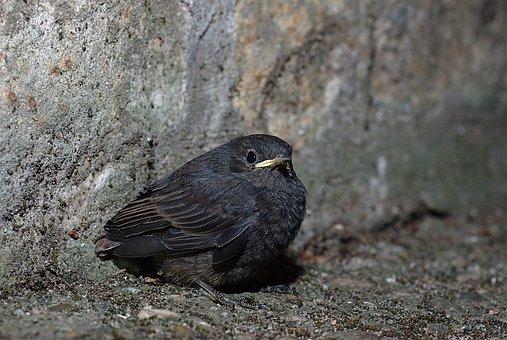 Bird, Nature, Animal World, Animal, Small, Wild
