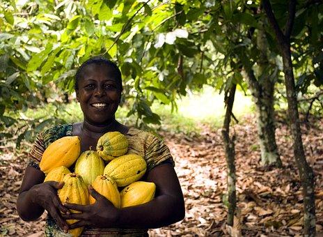 Fruit, Food, Grow, Tree, Leaf, Nature, Farm