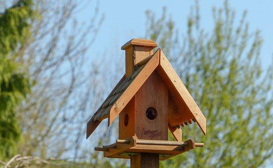 Bird Feeder, Nest, Roof, Home, Nature, Bird