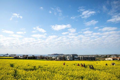 Rapeseed Blossoms, Nature, Heaven, Panorama, Scenery
