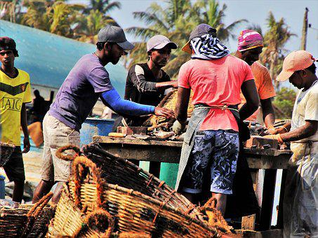 The Fishermen, Sorting, Fish Market, People, Male