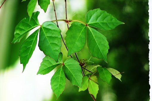 Leaf, Plant, Nature, Kinds Of Food, Tree, Outdoor