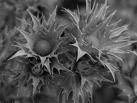 Nature, Flora, Spine, Spike, Desktop, Sharp, Prickly