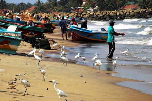 Ocean, Sand, Birds, A Fishing Village, The Waves, Beach
