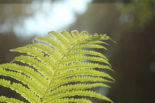 Leaf, Flora, Nature, Fern, Outdoors, Summer, Growth