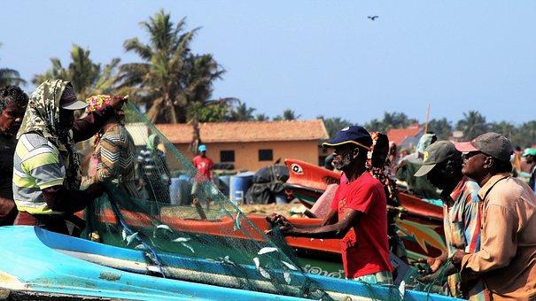 The Fisherman, Sea, Network, Fish, Work