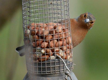 Bird, Wildlife, Nature, Animal, Outdoors, Wing, Feather