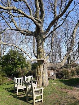 Tree, Wood, Bench, Nature, Outdoor, Chair, Park, Garden